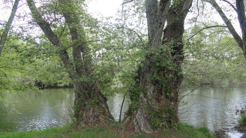 podas em árvores de carvalho
